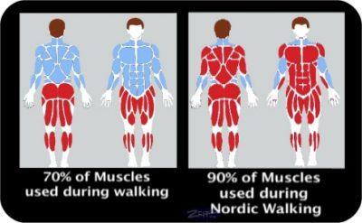 Nordic Walking Testimonials muscle usage